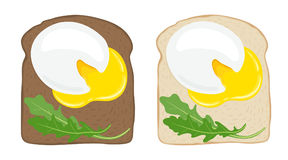 Poached eggs on toast bread. Set of two delicious poached egg sandwiches on white and dark bread. Vector illustration. Poached egg toast. Set of 2 delicious Royalty Free Stock Photo