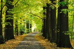 Poalnd, δάσος Στοκ φωτογραφία με δικαίωμα ελεύθερης χρήσης