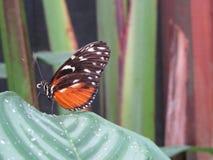 Poas Costa Rica Fotografía de archivo libre de regalías