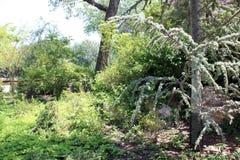 Pobielony drzewo Obraz Royalty Free