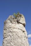 Pobiti Kamani (Standing Stones, Stone Forest) Unique Natural Roc Stock Photo