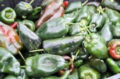 poblano πιπεριών Στοκ εικόνα με δικαίωμα ελεύθερης χρήσης