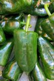 Poblano chili peppers chile Royalty Free Stock Photos