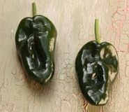 Poblano Chili Peppers Royalty Free Stock Image