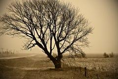 Pobocza drzewo Zdjęcia Royalty Free