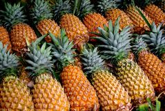 Pobocze ananasy Obrazy Stock