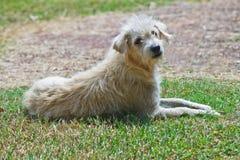 Pobocze pies na trawie Zdjęcia Stock
