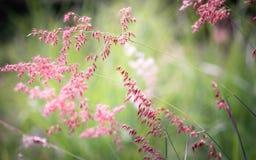 Pobocze trawy mogą wypiękniać drogę z kolorowymi kwiatami fotografia stock