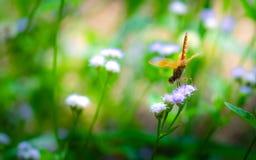 Pobocze trawy mogą wypiękniać drogę z kolorowymi kwiatami fotografia royalty free