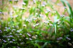 Pobocze trawy mogą wypiękniać drogę z kolorowymi kwiatami obraz stock