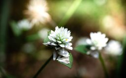Pobocze trawy mogą wypiękniać drogę z kolorowymi kwiatami zdjęcia royalty free