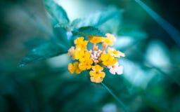 Pobocze trawy mogą wypiękniać drogę z kolorowymi kwiatami obraz royalty free