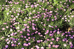 Poboczy wildflowers obrazy royalty free