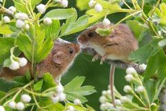 pocałunek zapieczętowane Fotografia Royalty Free