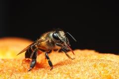 Poca abeja está frotando ligeramente la lengua larga fotos de archivo libres de regalías