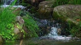 Poca agua de la cala en naturaleza metrajes