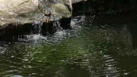 Poca caduta dell'acqua una corrente stock footage