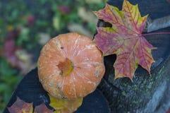 Poca calabaza en un tocón en hojas Imagen de archivo libre de regalías