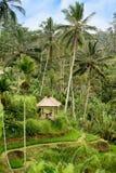 Poca capanna fra le palme verdi su una collina in Indonesia Immagine Stock