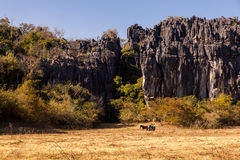 Poca carga de carro en el campo con la montaña de la piedra caliza en el fondo en el Brasil imagen de archivo