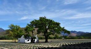 Poca casa de la granja en campo de la lavanda Foto de archivo