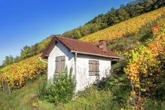 Poca casa en el viñedo otoñal Fotografía de archivo libre de regalías