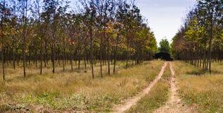 Poca casa en las plantaciones de goma Fotos de archivo