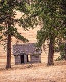 Poca casa en los árboles grandes Fotos de archivo