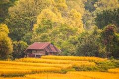 Poca casa sul giacimento del riso Immagini Stock