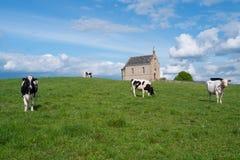 Poca chiesa con le mucche Fotografia Stock