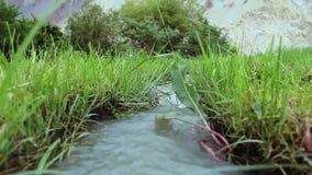 Poca corrente dell'acqua del ghiacciaio che entra fra l'erba verde nella valle archivi video