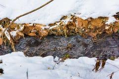 Poca corrente di ghiaccio, inverno nella foresta Fotografia Stock Libera da Diritti
