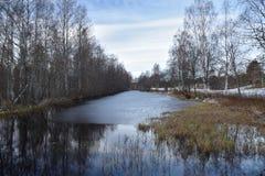 Poca corriente con hielo y abedules del otoño en ambos lado Imagen de archivo libre de regalías