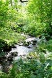 Poca corriente que corre a través de un bosque Foto de archivo