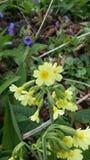 Poca erba gialla Fotografie Stock Libere da Diritti