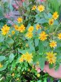 Poca flor imagenes de archivo