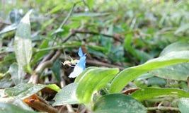 Poca flor Fotos de archivo libres de regalías