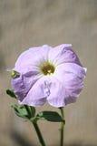 Poca flor Imágenes de archivo libres de regalías