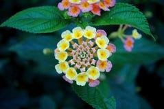 Poca flor Fotos de archivo