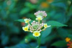 Poca flor Imagen de archivo libre de regalías
