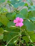 Poca flor Foto de archivo