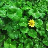 Poca flor amarilla Foto de archivo