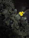 Poca flor amarilla Fotos de archivo libres de regalías