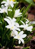 Poca flor blanca Imagen de archivo