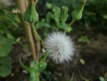 Poca flor blanca Fotos de archivo