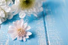 Poca flor blanca en el azul coloreó el fondo de madera Foto de archivo