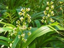 Poca flor blanca hermosa en el jardín con luz del sol Imagen de archivo libre de regalías