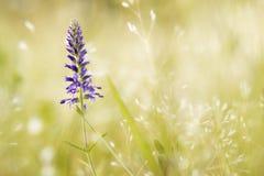 Poca flor en el campo Imágenes de archivo libres de regalías