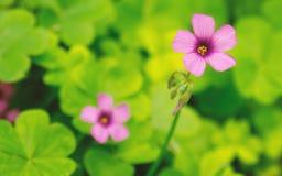 Poca flor en el fondo verde sping Imagenes de archivo