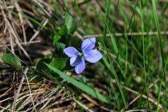 Poca flor en la hierba imagen de archivo